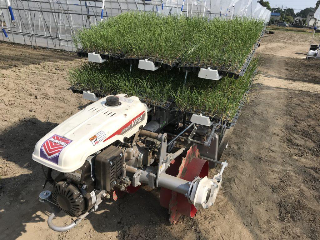 nira-planting-2019_2