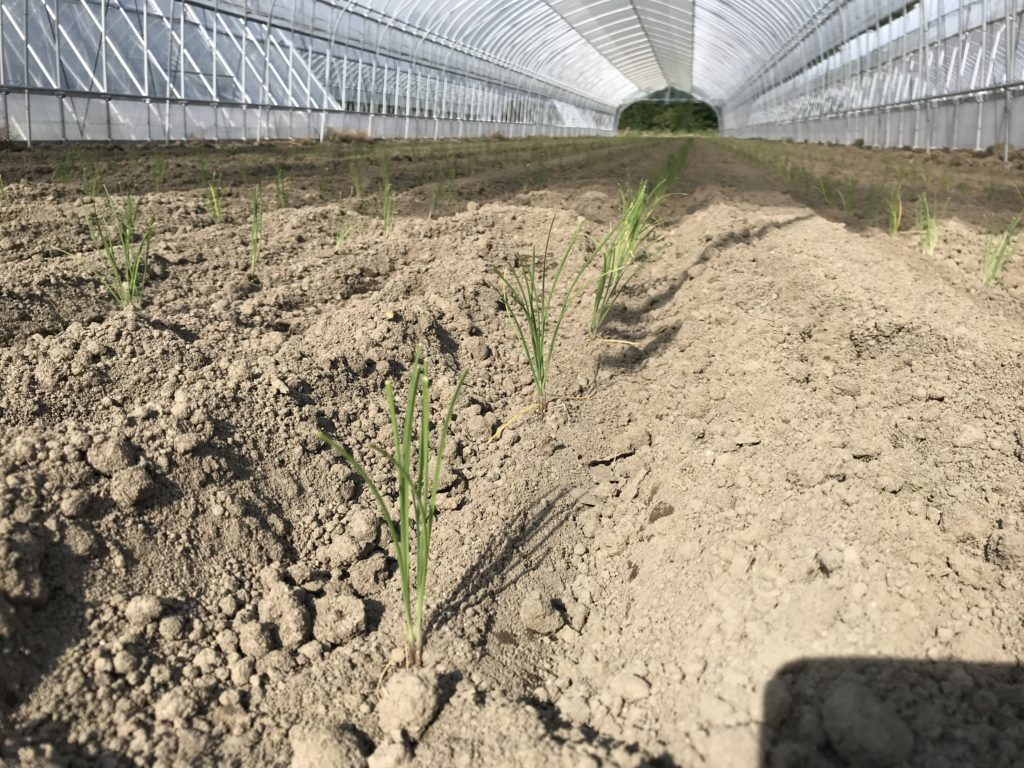nira-planting-2019_8