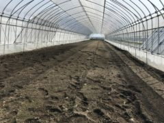 ニラ収穫終了【2019年度】と土壌消毒【2020年度】