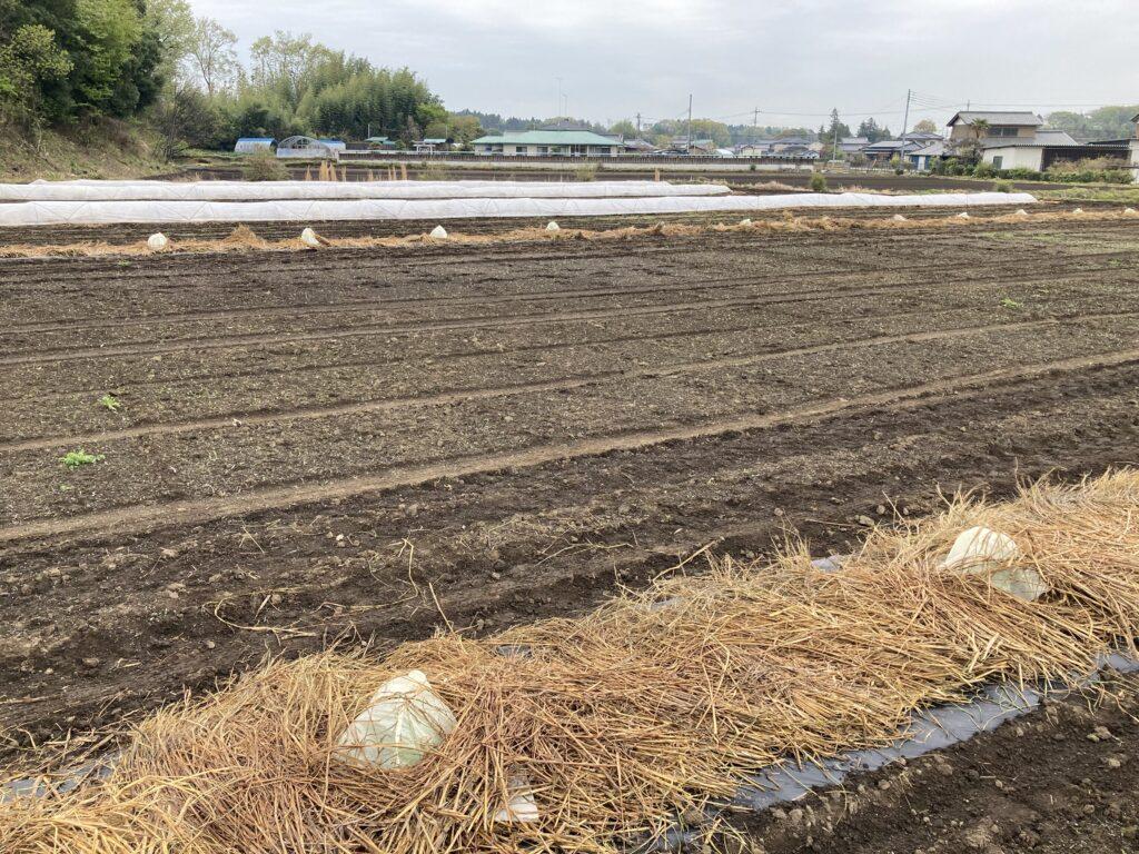 kanpyo-planting-2021-5
